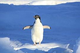 penguin-56101__180
